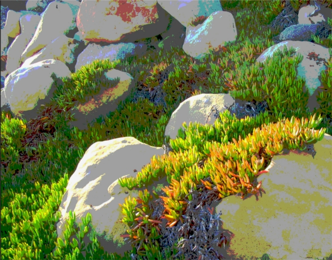 Rocks and Iceplant